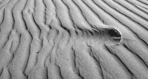 Flickr free photo - Zen Disruption